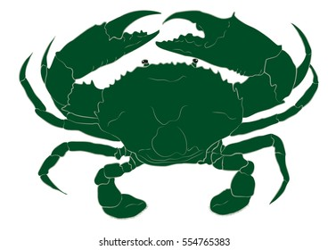 Green Mud Crab illustration