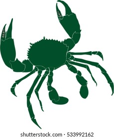 Green mud crab Scylla serrata illustration