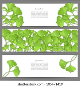 Green nature eco bio modern abstract creative vector banner set with spring ginko leaf pattern