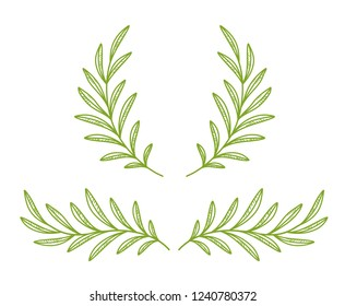 green olive branches wreath, laurel divider with leaves