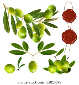Green olives with leaves. vector illustration