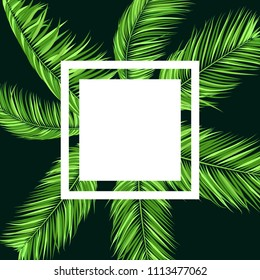 Green Palm Branches in Various Forms. Tropic Foliage. Illustration of Jungle Plants. Vector Palm Leaves. Floral Elements Set. Detailed Palm Leaves for Pattern, Wallpaper, Print or Your Creative Design