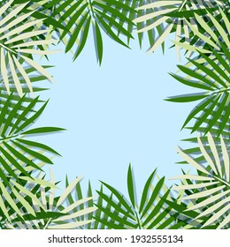 green palm leaf vector for background. Tropical palm frond frame. Summer tropical leaves. summer greeting cards