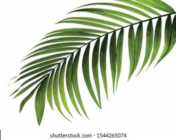 green palm leaf vector illustration background eps10