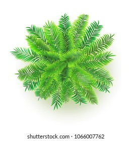 Green palm tree, vector 3D illustration isolated on white background. Top view on branches of coconut tree