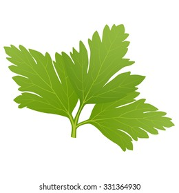 green parsley leaves isolated on white background