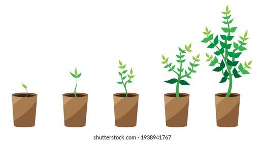 green plant growth soil. Flat cartoon infographic. Vector set. Stock image. EPS 10.