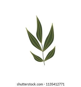 Green plant leaf for natural floral design in flat style isolated on white background. Botanical decorative element of tree or flower branch of foliage in vector illustration.
