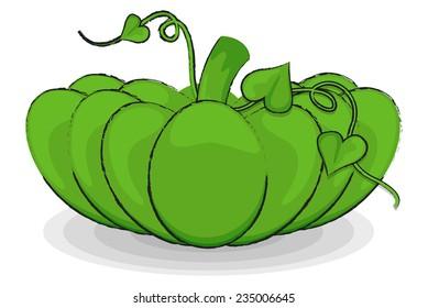 Green Pumpkin Vegetable