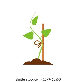 Green sapling. Sprout tied to prop. Agriculture attributes concept. Vector illustration can be used for topics like gardening, horticulture, cultivation