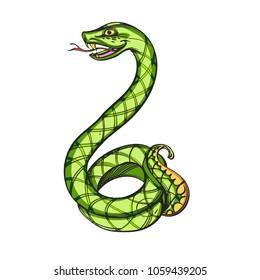 Green snake. Vector illustration isolated on white background.