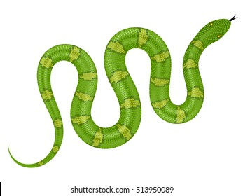 Green snake vector illustration. Isolated serpent on white background.