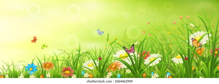 Green spring or summer meadow with grass, flowers and butterflies