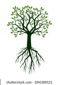 Green Spring Tree with Leaves and Roots . Vector Illustration.