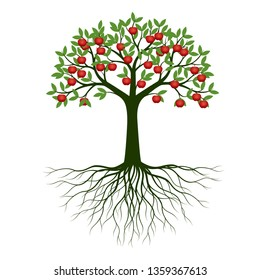 Green Spring Tree with Root and Apples. Vector Illustration. Plant in garden.