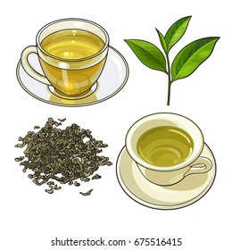 Green tea cup, fresh and dry leaves, sketch vector illustration isolated on white background. Hand drawn green tea drink in transparent glass and china cup and saucer, fresh and dry leaves