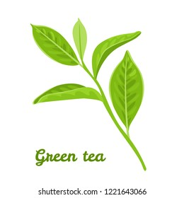 Green tea leaves isolated on white background. Vector illustration of a plant in a flat cartoon style. Icon, logo, design element.