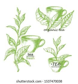 Green tea. National traditional beverage, cup. Natural herbal drink. Set of symbols, vintage sign. Botanical plant, branch, leaves. Vector hand drawn illustration