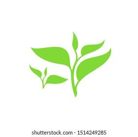 Green tea. Vector illustration. Isolated tea leaves on white background. Green branch. Logo