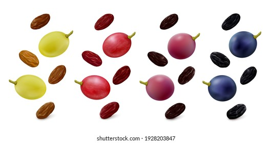 Green Thompson seedless, pink, purple and blue grape berries with raisins in different colors hang in the air isolated on white background. Realistic vector illustration.