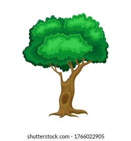 Árbol verde con tronco marrón y corona leafante como ilustración vectorial de elemento forestal