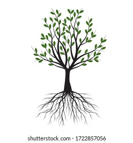 Green Tree with Leaves. Vector outline Illustration. Plant in Garden.