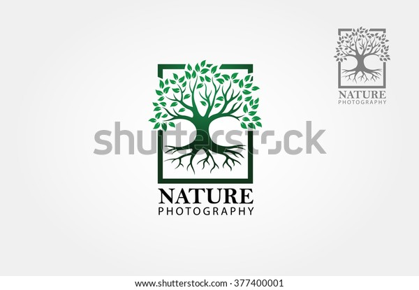 Green tree photography Logo template. Clean and modern style on white background