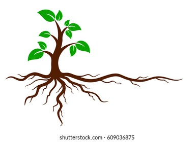 Green tree with roots.