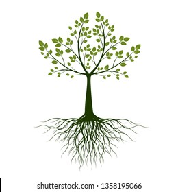 Green Tree with roots on white background. Vector Illustration.