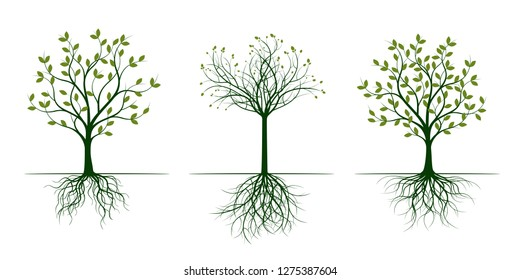 Green Trees with Leaves. Vector Illustration. Plant and Garden.