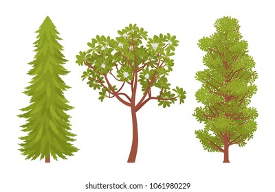Green trees set. Woody plants with hard trunk, branches, and leaves, pine, chestnut. Urban landscape design, environment and ecology concept. Vector flat style cartoon illustration