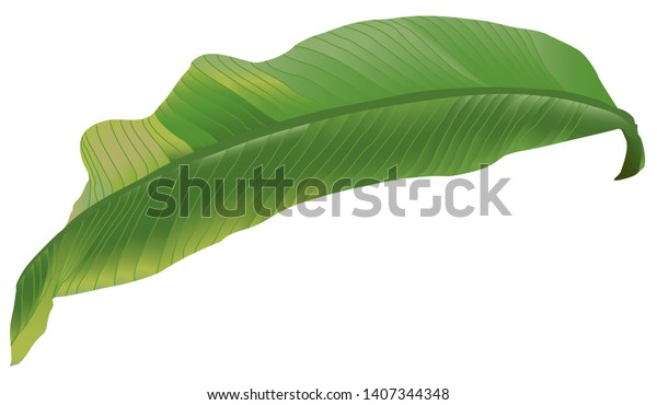 Green Tropical Leaves Set On White Stock Vector Royalty Free 1407344348 Find the best free stock images about tropical leaves. shutterstock