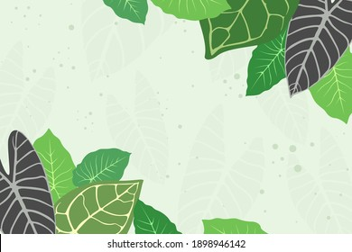 Green tropical leaves, green taro leaves, nature background with empty space