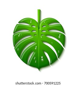 Green tropical Monstera deliciosa plant leaf covered with rain drops and isolated on white background