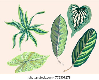 Green Tropical Vintage Leaves Graphic Elements