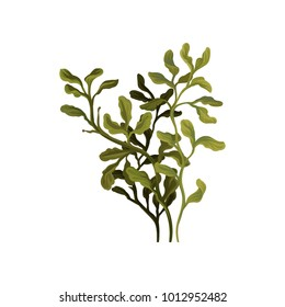 Green underwater seaweed, aquatic marine algae plant vector Illustration