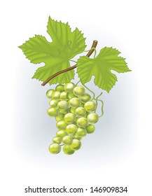 Green vector grapes