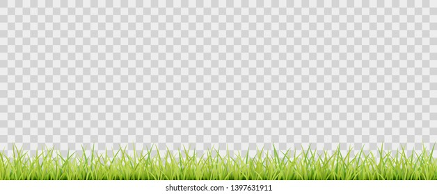 Green vector grass on transparent background