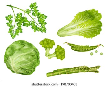 Green vegetable organic food set with cabbage parsley peas lettuce isolated vector illustration