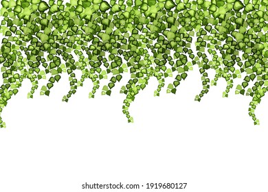 Green vine, liana or ivy hanging from above or climbing the wall.Decoration for garden or home.Template on white background.