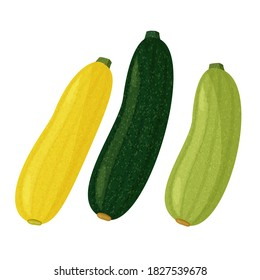 Green and yellow squash and zucchini on white background. Vector realistic meal collection.