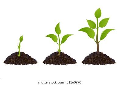 나무 성장과정 스톡 일러스트, 이미지 및 벡터 Shutterstock