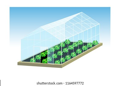Greenhouse vector illustration. Growing of plants under covered glass structure