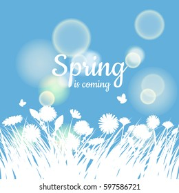 Greeting card Spring background, grass, chamomile flowers, dandelions, butterflies, vector, illustration