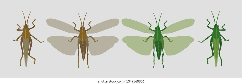 grey brown locust and green grasshopper closed and open wings