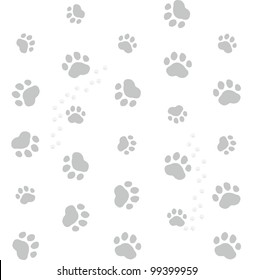 grey cat footprints on white background