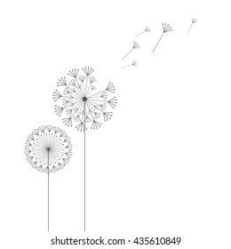 Grey dandelions on white background