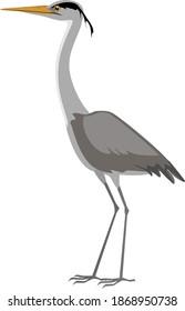 Grey heron (Ardea cinerea) isolated on white background