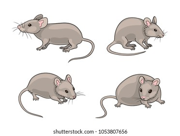 Grey mice in different poses. Vector illustration. EPS8