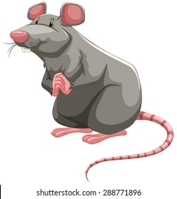 Grey rat standing with folded hands
